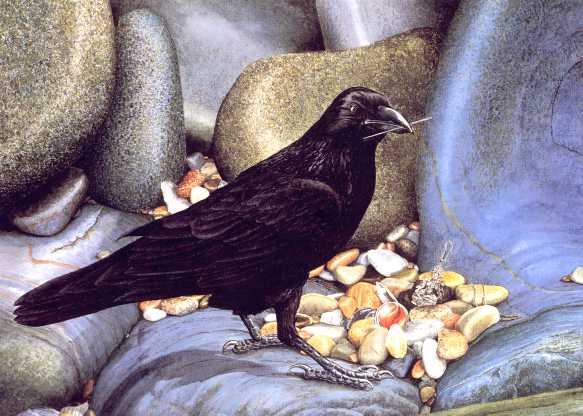 crow300jpg