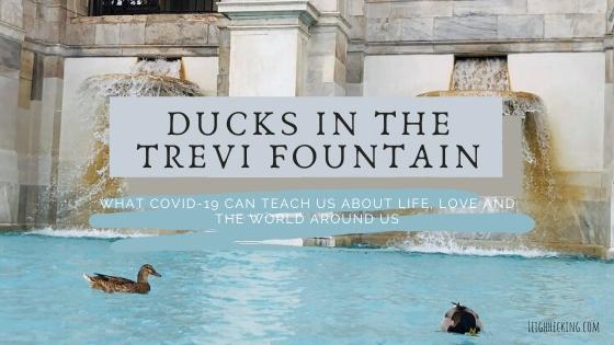 Ducks in the trevvi fountain